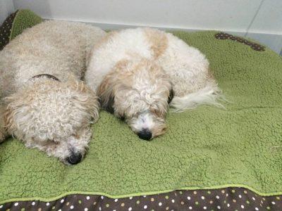 Dinky Dog Care-2 dogs