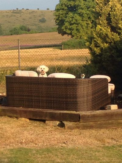 Dinky Dog Care - white dog sofa