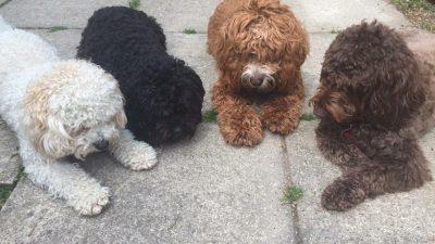 Dinky Dogs Daycare